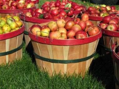 apple-bushel-380x285